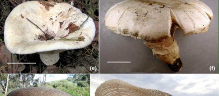 mushroom blog post body size